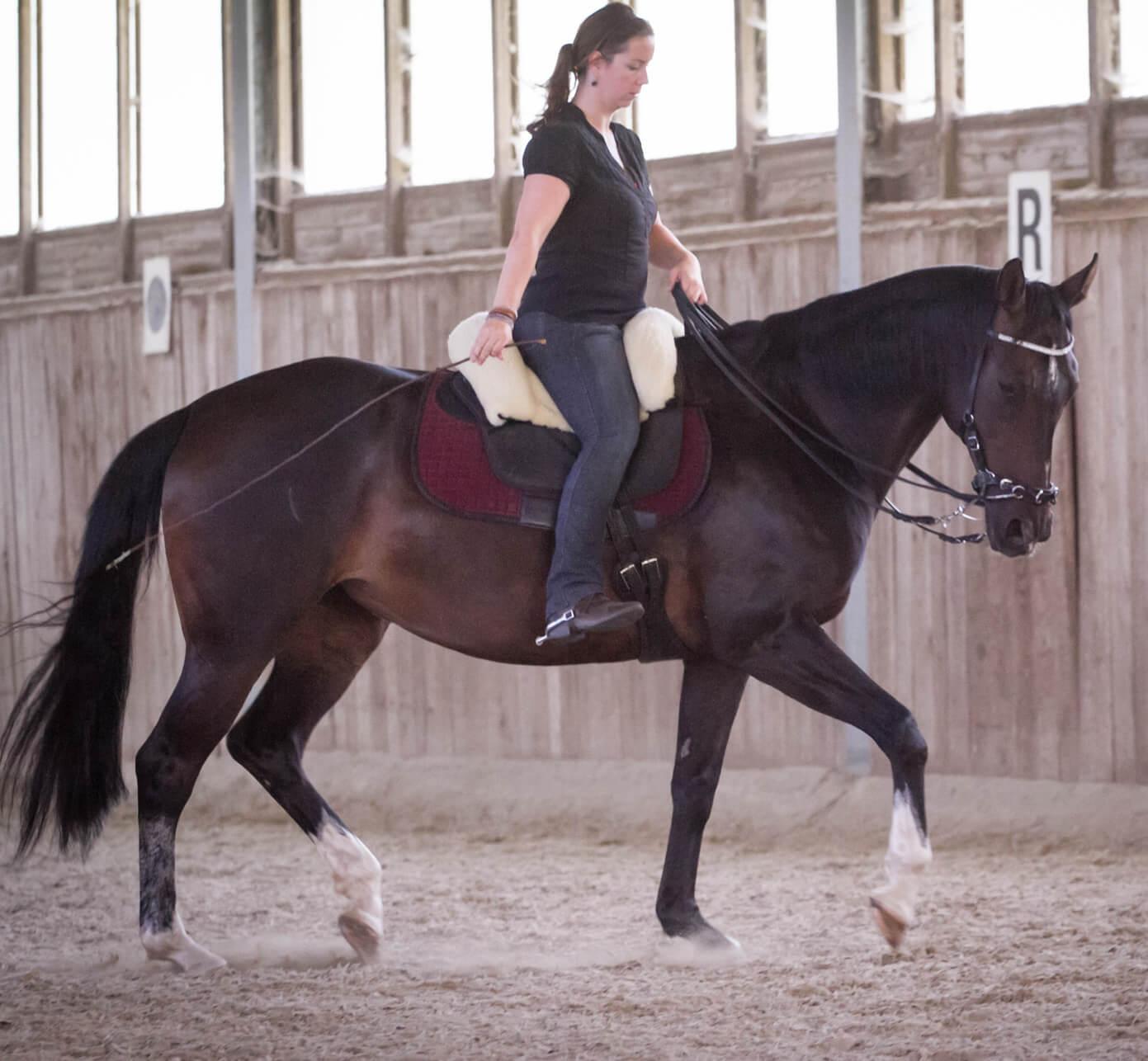 Haben Sie ein gutes Händchen für Ihr Pferd?