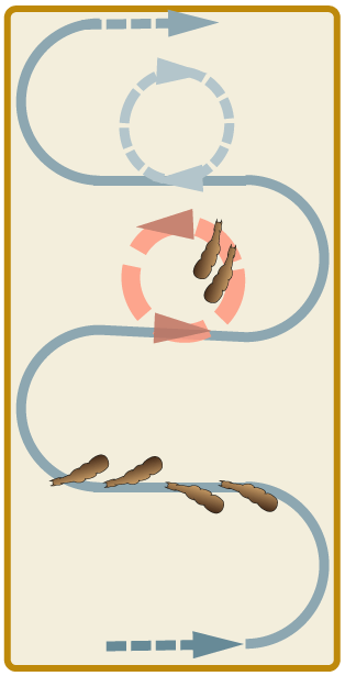 seitengaenge_schlangenlinien