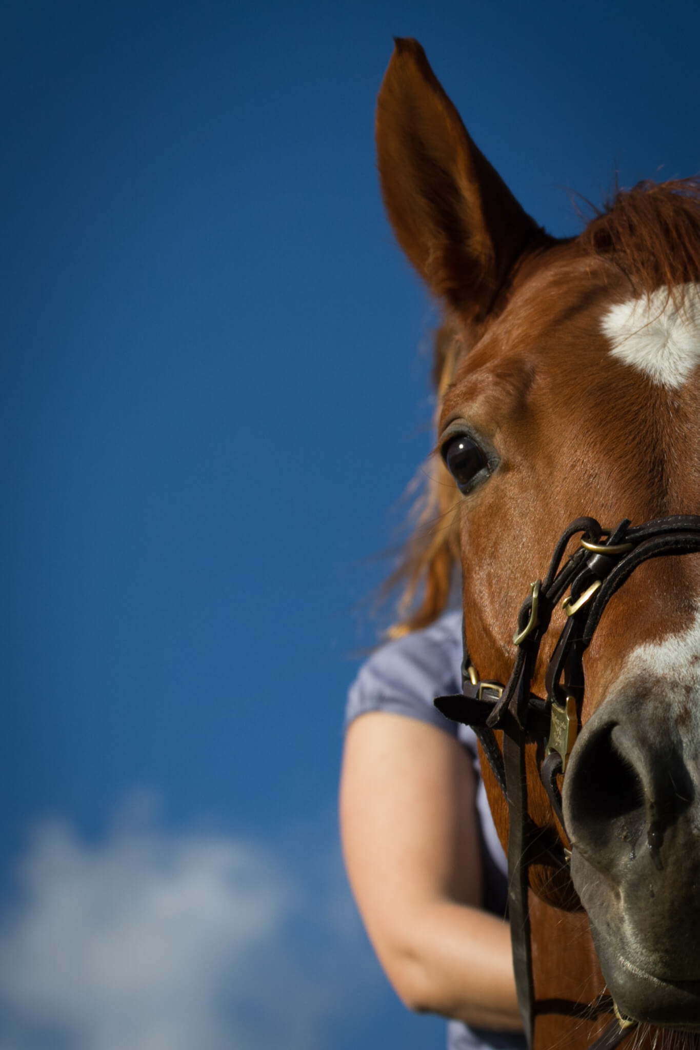 Wer bin ich in den Augen meines Pferdes?