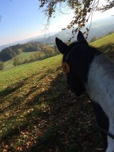 Jac unterwegs am schönen Kraxenberg