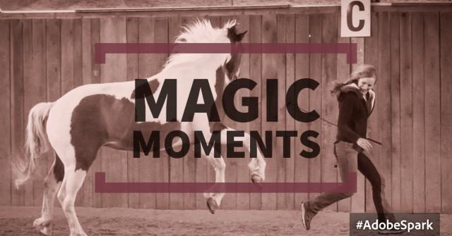 Magische Meetings mit dem Pferd