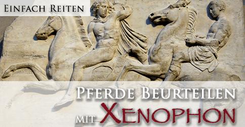 Pferdebeurteilung mit Xenophon
