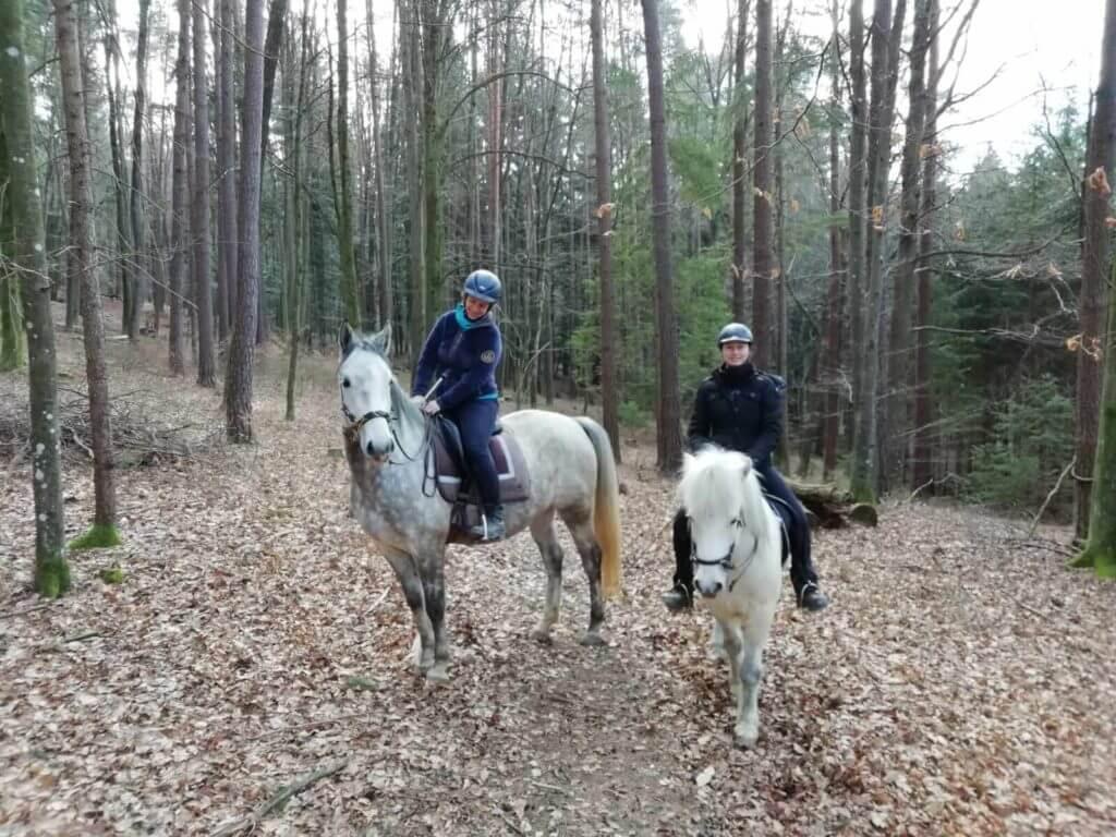 """Konrad bei seinem ersten """"Gruppenausflug"""" ins Gelände. Gerade für junge Pferde ist es wichtig, den Bewegungsdrang nicht in der Bahn zu fördern, sondern draußen im Gelände."""