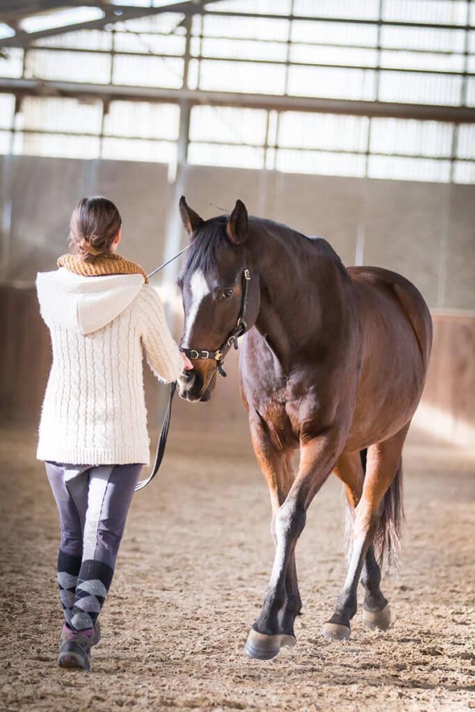 Das Verständnis um die Sekundarhilfen ist für die Ausbildung des Pferdes bedeutend.