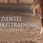 Effizientes Muskeltraining
