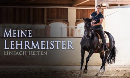 Meine Lehrmeister die Pferde